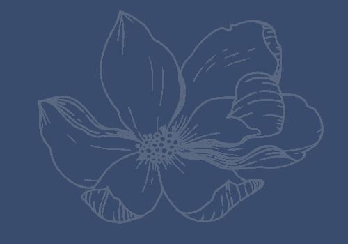 magnolia baby company